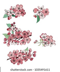 Free hand Sakura flower vector set, Beautiful line art Peach blossom isolate on white background.Japanese cherry blossom isolate set.