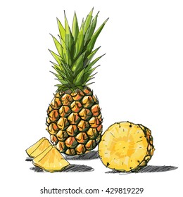 Free hand sketch, Pineapple and a half of pineapple, fruit, transparent, Vector, transparent