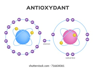 free radical and Antioxidant vector . Antioxidant donates electron to Free radical . infographic