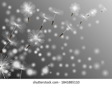 Freedom Flower, Blooming Blossom. Nature background with dandelion blowing seeds. Floral wallpaper with summer or spring flower and flying fluff. Vector illustration