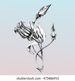 freehand drawing flowers and buds , vector