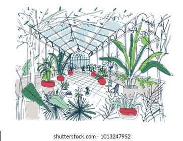 Freehand drawing of interior of botanical garden full of tropical plants with green foliage. Rough sketch of orangery with exotic trees growing in pots and panoramic windows. Vector illustration.
