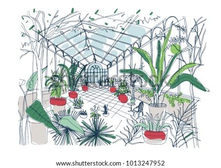 Freehand Drawing Interior Botanical Garden Full Stock Vector