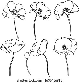 freehand drawing one line doodle poppies