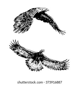 Freehand sketch of flying eagle. Hand drawn on white background. Vector illustration
