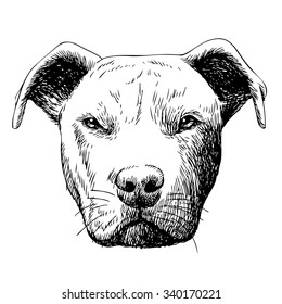 freehand sketch illustration of American Pit Bull Terrier, American Staffordshire Terrier, and Staffordshire Bull Terrier dog , doodle hand drawn