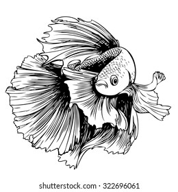 freehand sketch illustration of Betta splendens, Siamese fighting fish doodle hand drawn