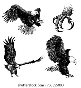 freehand sketch illustration a set of eagle, doodle hand drawn