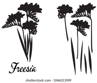 Freesia silhouette vector illustration. Bouquet of Freesias. Set of flower elements. Part of the flower silhouette series.  Suitable for cutting, print. Template for cutting, greeting card, decoration