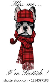 French buldog with a scottish cap and a pipe - vector illustration