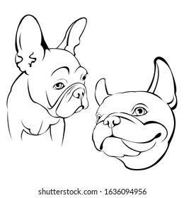 French bulldog. Cartoon French Bulldog on. Vector illustration. close up portrait of the domestic dog French Bulldog breed.