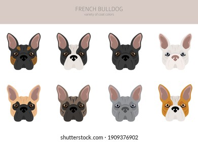 French bulldog. Different varieties of coat color dog set.  Vector illustration