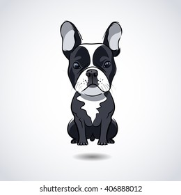 French bulldog isolated on white background. Vector illustration