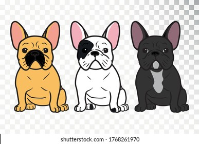 French bulldog on a transparent background.  A cute little dog. Different colors of the French bulldog.
