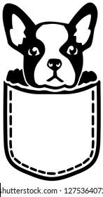 French Bulldog in a pocket