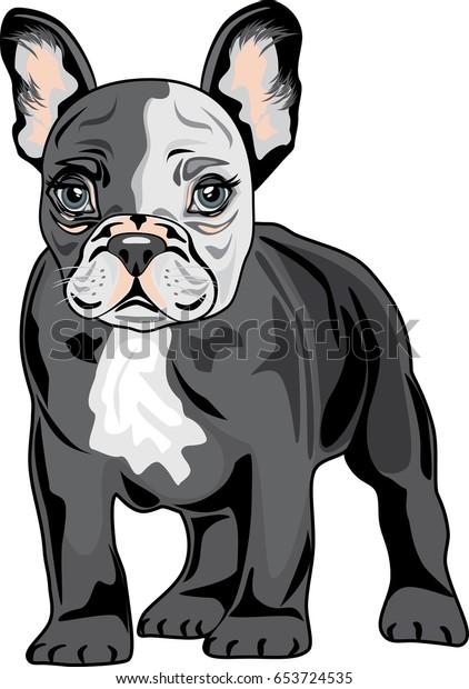 french-bulldog-vector-600w-653724535.jpg