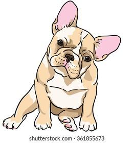 French bulldog. Vector illustration.