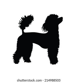 French poodle vector silhouette