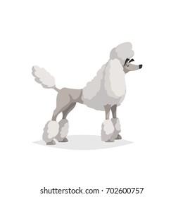French white poodle cartoon illustration. Comic dog character. Pet animal isolated on white background.