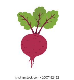 Fresh beet with leaf. Natural Root. Vegetable Ingredient for food