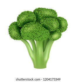Fresh broccoli icon. Realistic illustration of fresh broccoli vector icon for web design