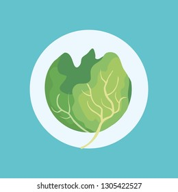 fresh cabbage vegetable icon
