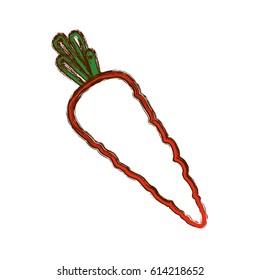 fresh carrot vegetable
