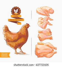 Fresh chicken meat. Top view. Isolated on a white vintage isolated sketch hand drown