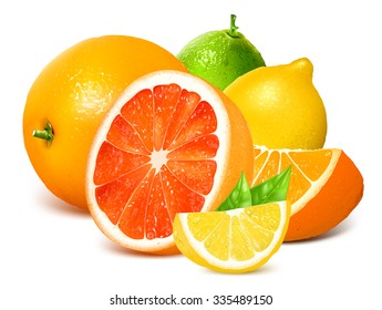 Fresh citrus fruits. Vector illustration.