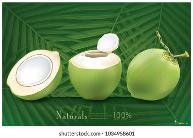 Fresh coconut with green coconut leaf background.illustration vector