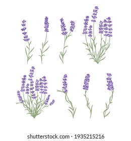 Fresh cut fragrant lavender plant flowers bunch, realistic icons set isolated vector illustration.