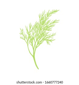 Fresh fennel branch isolated on white background. Dill bunch Vector illustration.