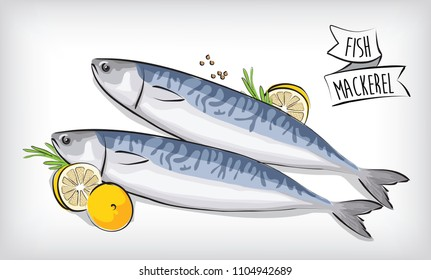fresh fish mackerel salt vector design