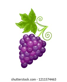 Fresh food ripe grapes of autumn season isolated vector. Healthy meal, fruits berries rich in vitamins, sweet product harvesting at autumnal period