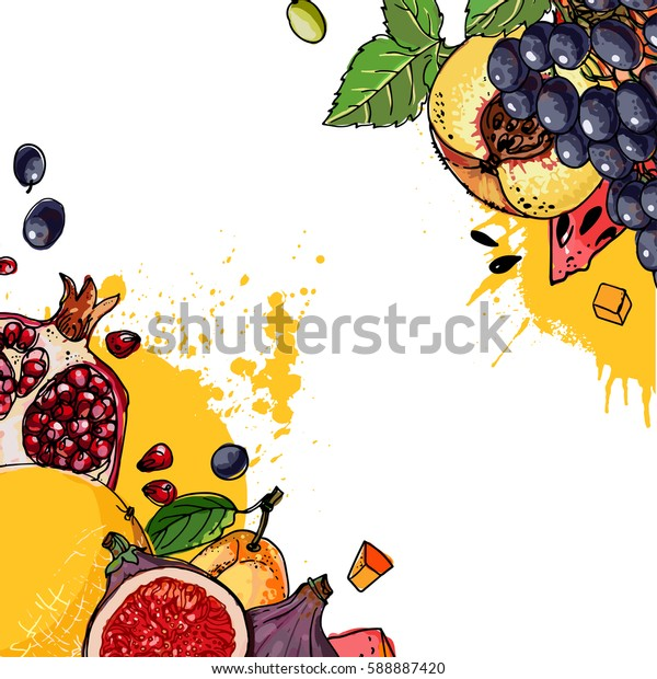 Fresh food. Watermelon, cantaloupe, pomegranate, apricot, persimmon line drawn on a white background. Vector illustration.