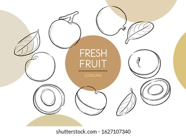 Fresh fruit illustrations collection isolated. Longan set vector drawing, organic food hand drawn, peel longan and leaves with color circle on white background