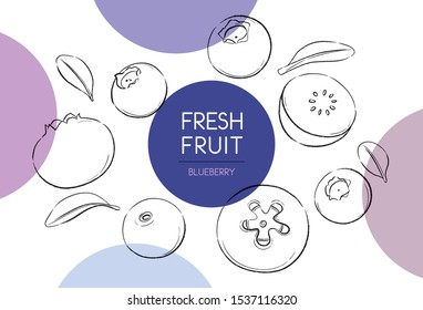 Fresh fruits illustrations collection isolated. Blueberry set vector drawing, organic food hand drawn, Blueberry leaf and sliced piece with color circle on white background