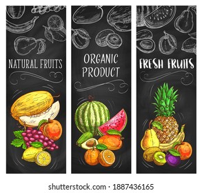 Fresh fruits vector sketch banners, natural pineapple, lemon, apricot or grapes with melon. Tropical kiwi, banana and watermelon with avocado. Hand drawn eco farm organic products exotic assortment