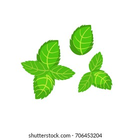 Fresh green basil leaves icon. Flat illustration of basil leaves vector icon logo isolated on white background