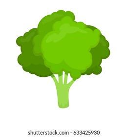 Fresh and green broccoli vector icon for food illustration