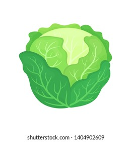 Fresh green cabbage isolated on white background. Organic food. Cartoon style. Vector illustration for design.