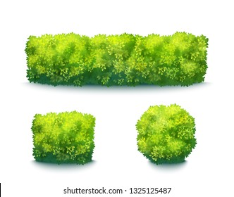 Fresh Green Garden Hedges Isolated On White. Vector Realistic Set