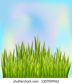 Fresh green grass border with blue sky background. Border decoration element. Vector illustration