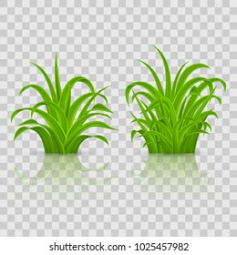 Fresh Green Grass Elements for Spring Design. Illustration on Transparent Background