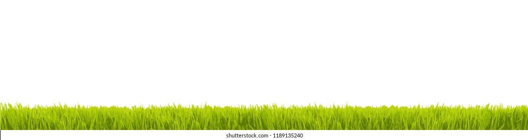 Fresh green grass in large wide panorama as frame border in a seamless empty white transparent background. Vector illustration.