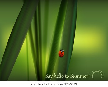 Fresh green grass and lovely red ladybug. Summer season.