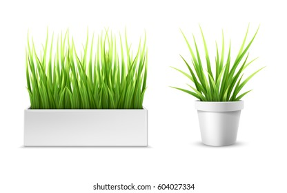 Fresh green grass in a rectangular and round pot. Element of home decor. The symbol of growth and ecology. Vector realistic illustration, isolated.