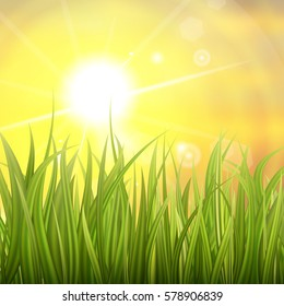 Fresh green grass. Sunburst with sun flare on green grass. Colorful sunset or sunrise. Spring or summer bokeh background. Vector Illustration.