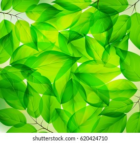 Fresh Green leaf pattern on the Surface.Vector ilustration.EPS10