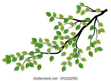 Fresh green leaf spring icon